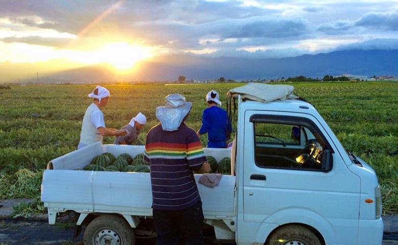 朝採り収穫をして当日発送