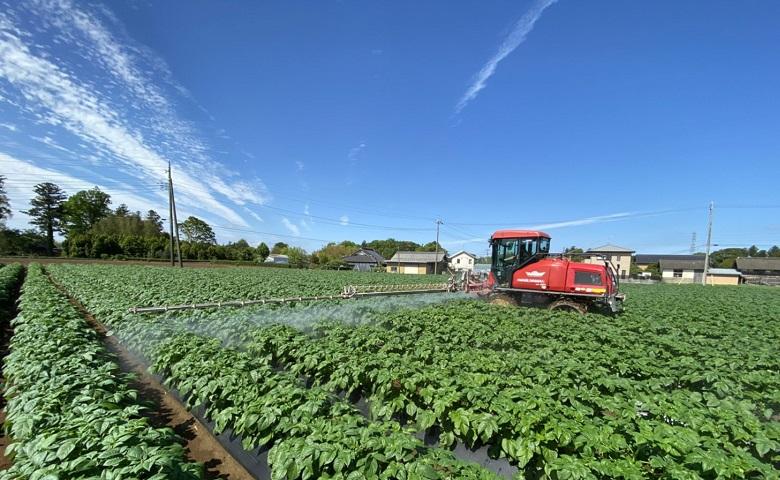 茨城県はさつまいも生産量全国第2位 通販(お取り寄せ) 紅はるか