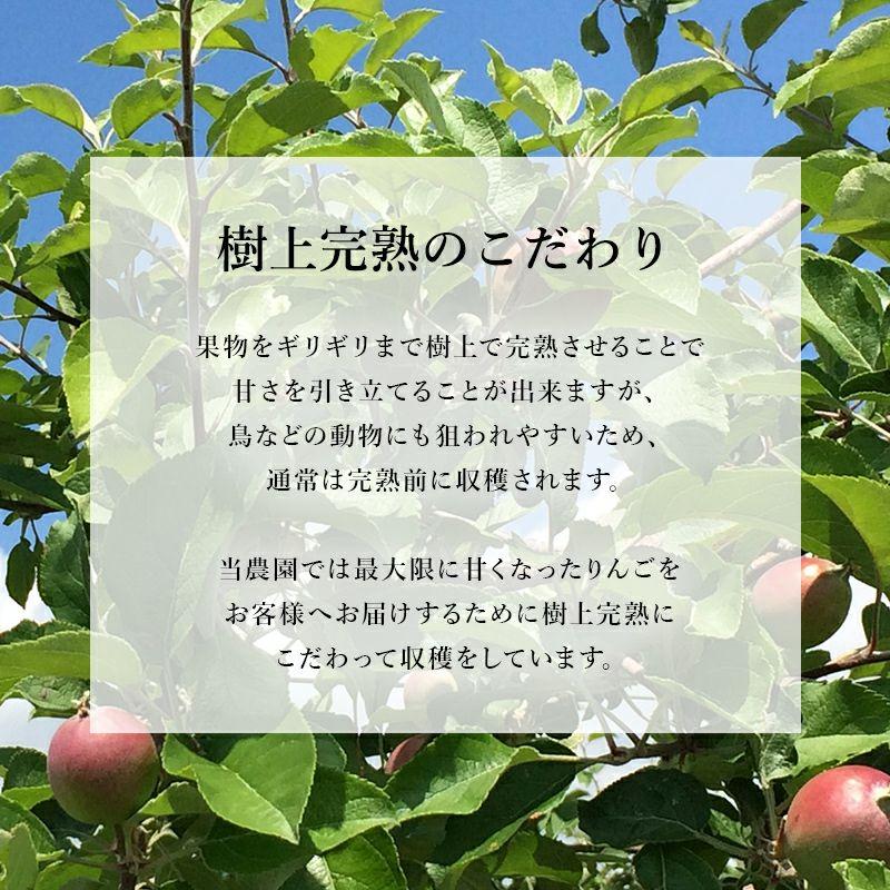 長野県産サンふじりんご 通販 お取り寄せ むぎわらぼうし 樹上完熟