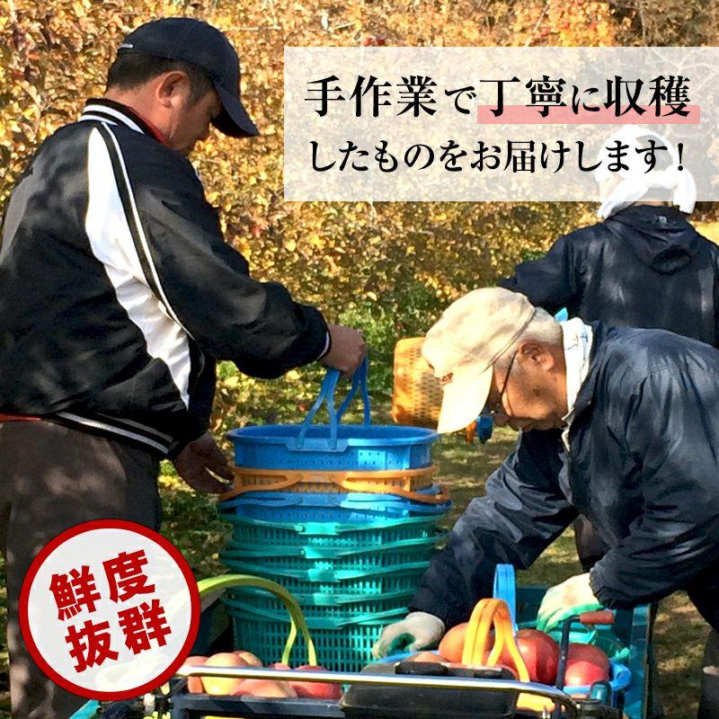 長野県産サンふじりんご 通販 お取り寄せ むぎわらぼうし 丁寧に収穫